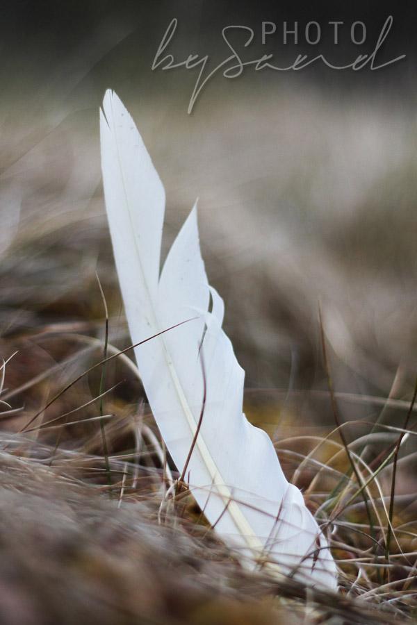 Feather 1 liten