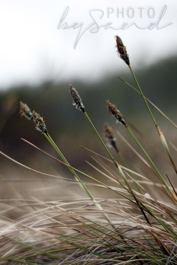 Grass liten